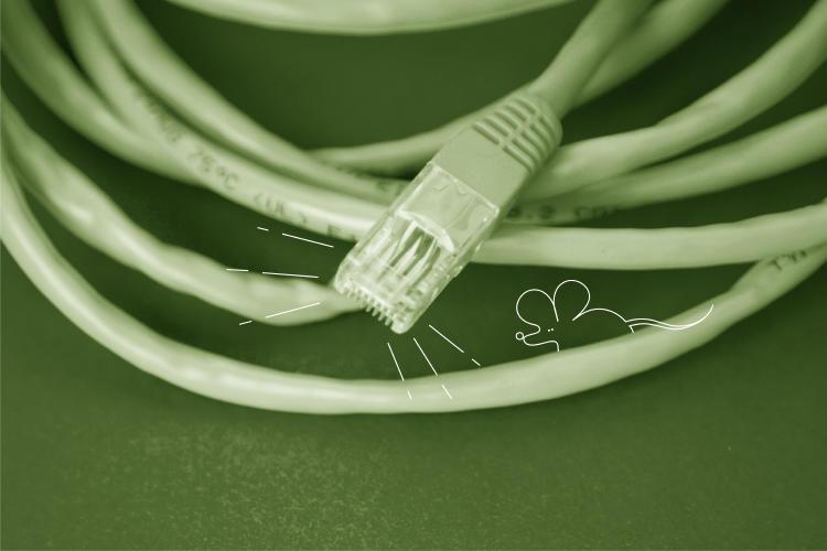 cable-conexión-fibra